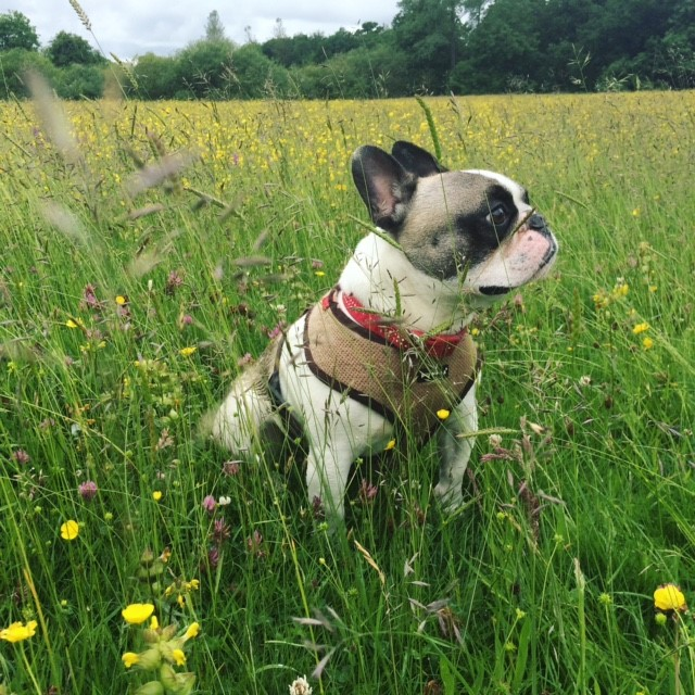 A dog enjoying his surrorundings