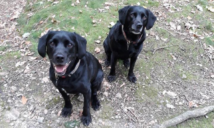 Paul's dogs Jasper and Sheba